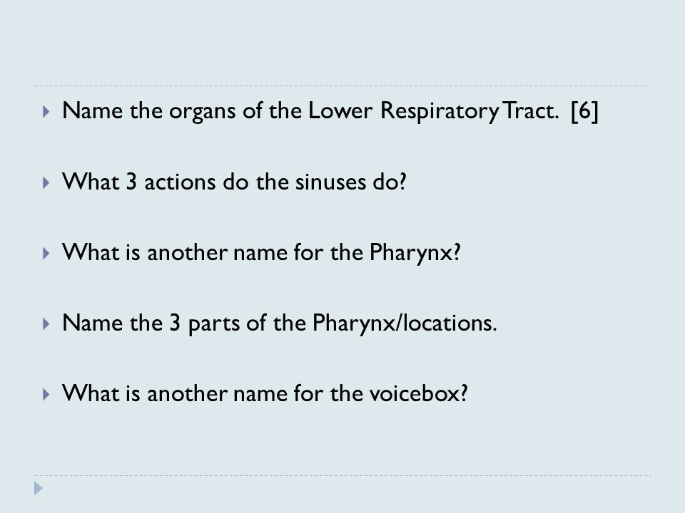 Name the organs of the Lower Respiratory Tract. [6]